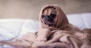 Cómo cuidar a nuestras mascotas del frío!