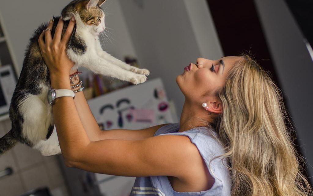 Feliz día a todos los gatitos!!