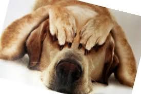 Nuestras mascotas también se estresan!