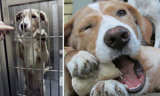Día del perro Adoptado! #AdoptaNoCompres